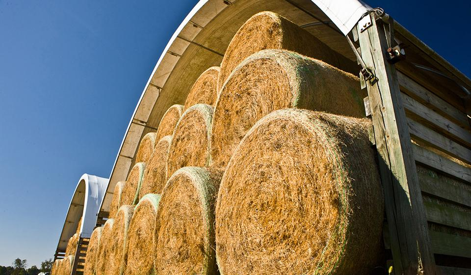 Open ending haybarn filled with multiple rolls of dried hay